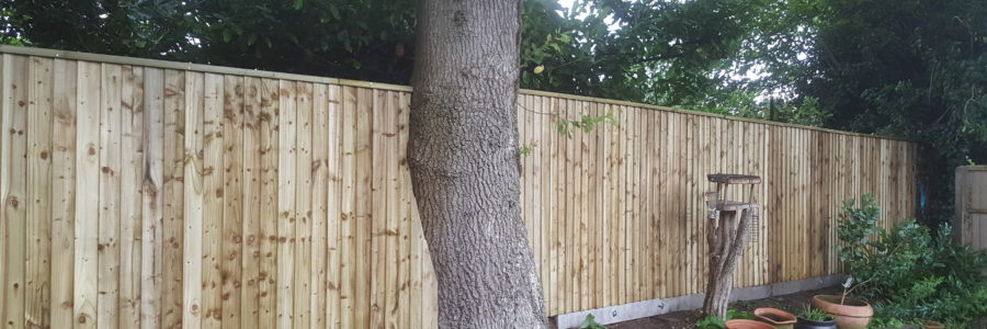 Closeboard fencing installed on concrete universal posts. Built to fit between a large oak tree