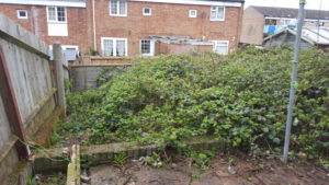 Before photo. 6ft high brambles in places